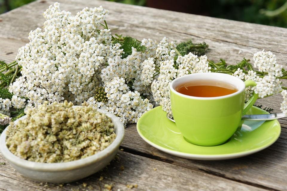 Getrocknete Blüten der Schafgarbe für Tee